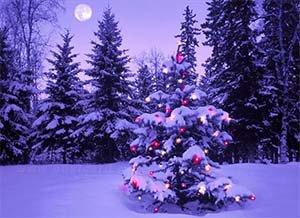 """Новый год на базе отдыха """"Отрада"""""""